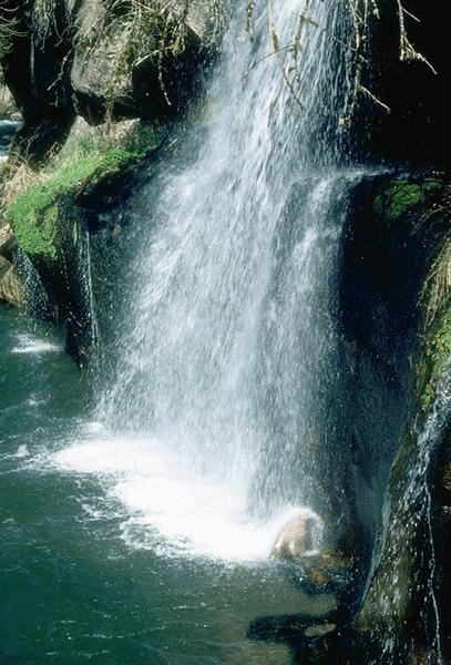 hvad er biologisk vand